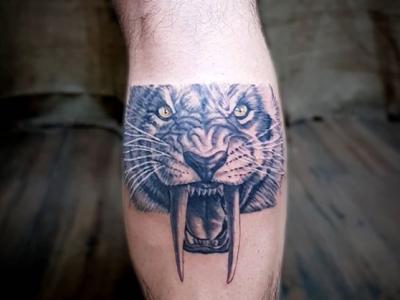 אריה כועס זועם שריר התאומים